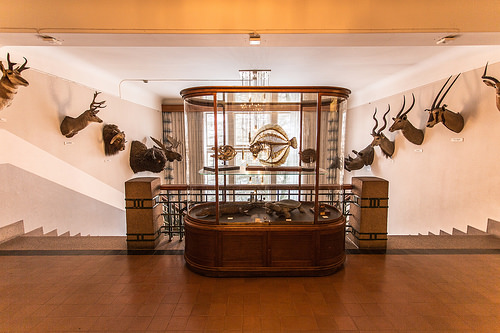 Zoologisk Museum oslo photo